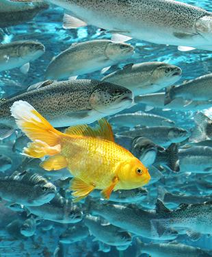 fish_gate