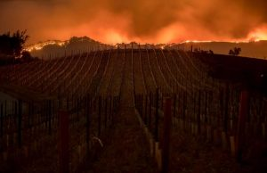 D262 Vineyards Burning